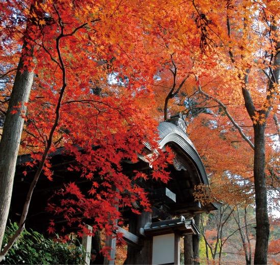 色鮮やかな紅葉が美しい有馬温泉