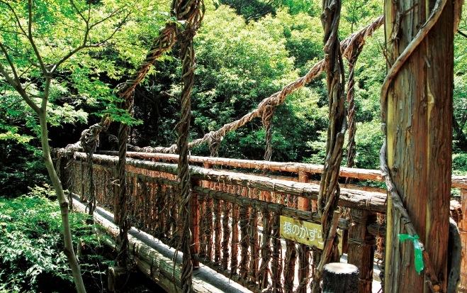 山道にある「猿のかずら橋」。森に入っていくと、徐々に水のせせらぎが大きく聞こえてくる