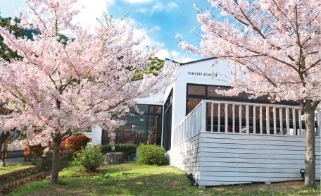 須磨浦公園は神戸有数の桜の名所でもあり、春にはカフェも満開の桜に囲まれる
