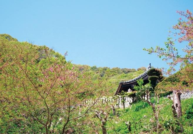 見上げると、佐藤さんが宮司を務める北野天満神社の拝殿が見える