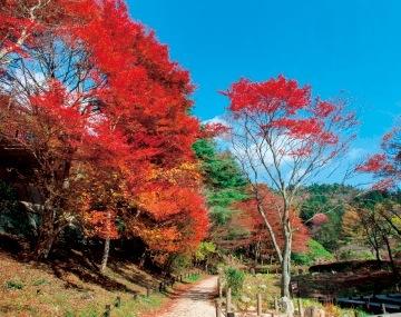 秋になると、標高の高い六甲山では、市街地よりも早く紅葉する