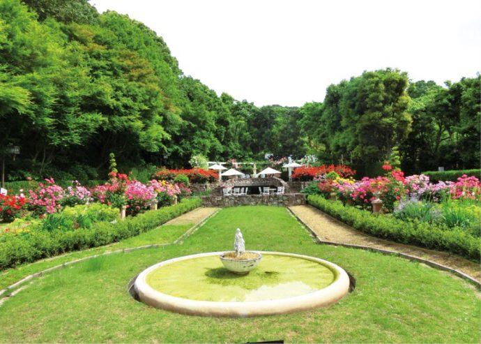 植物園ゾーンにあるプライベートガーデン風の「花の庭園」に咲くバラ