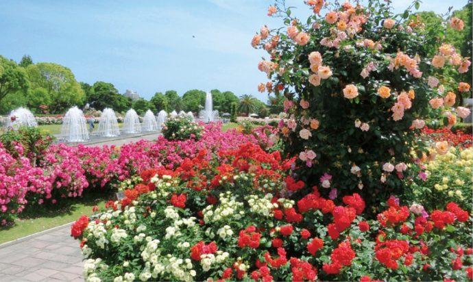 欧風噴水庭園にある「王侯貴族のバラ園」