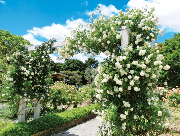 バラの香りに包まれる園内