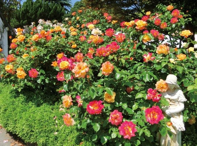 柵がないため、花を間近に見ることができる