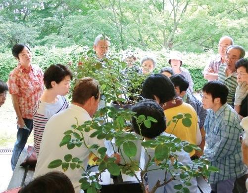 夏のバラ剪定教室