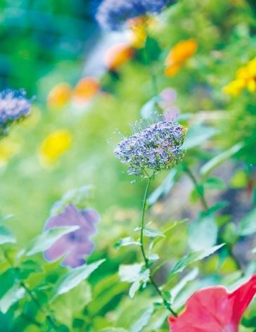 美しい花々は東山町の地元住人の手によるもの(東山公園)