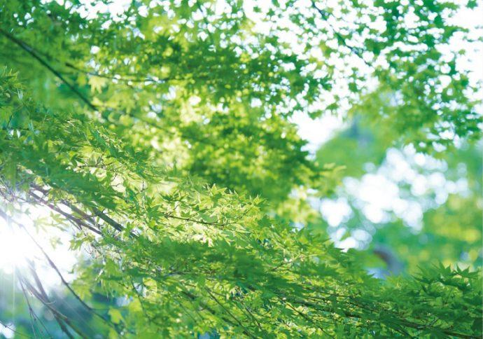 瑞々しい緑が、人々の暮らしに潤いを与える(東山公園)