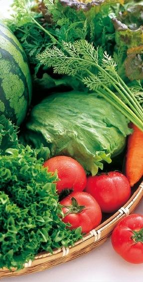 野菜 今が旬の一番おいしい 産地からお届けします