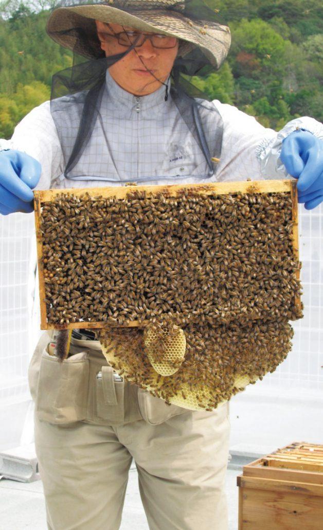 「食べる楽しみを実感してほしい」と養蜂をはじめた