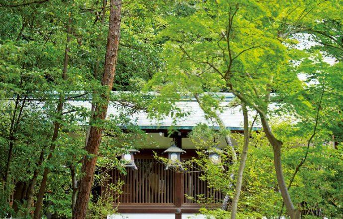 自然と住まいが調和する芦屋。緑豊かな芦屋神社はその象徴のよう
