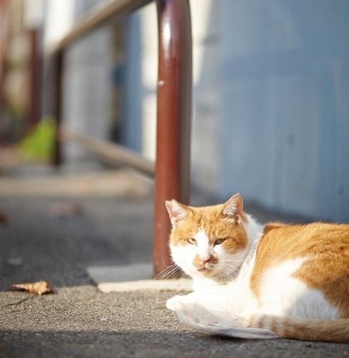 のんびりひなたぼっこしている地域猫