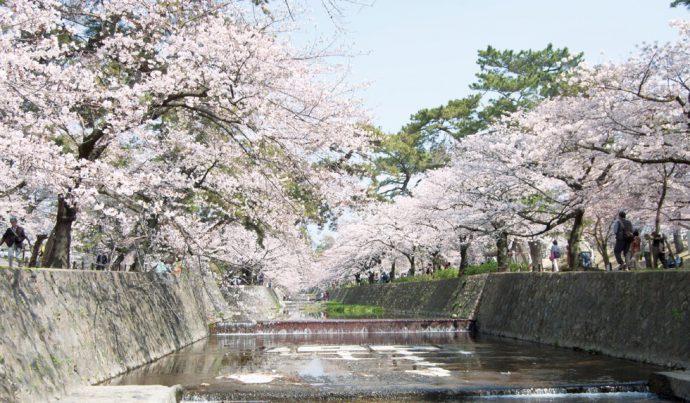 戦後の昭和24年(1949)に桜の若木が植えられ、今や桜の名所となった夙川