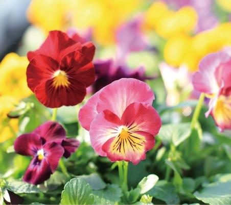 神戸は花卉の一大産地でもある