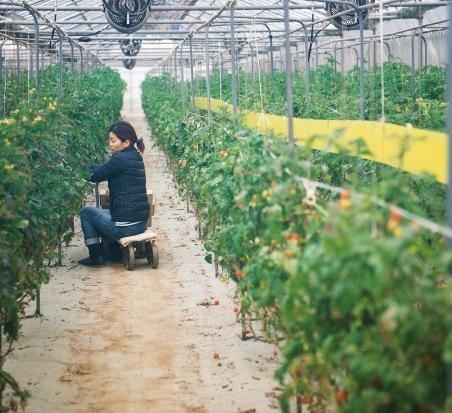 西区・北区では多くの農家が生産に励む