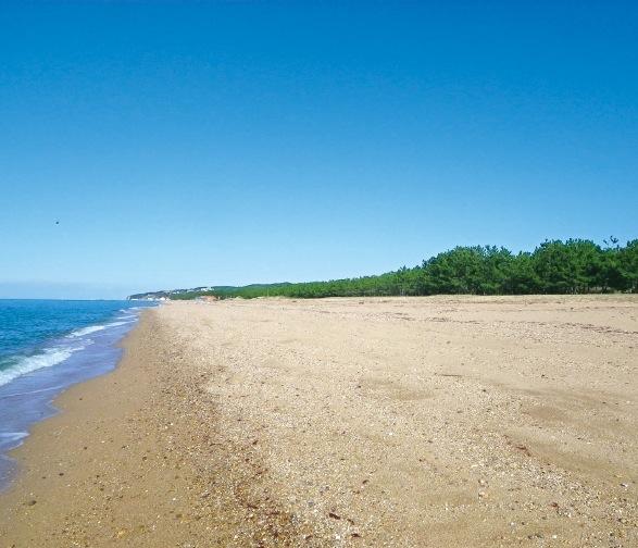 南あわじ市、慶野松原の海岸付近から松帆銅鐸が発見された