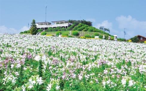 年に3回の植え替えがあり、約30品種の花々を見ることができる