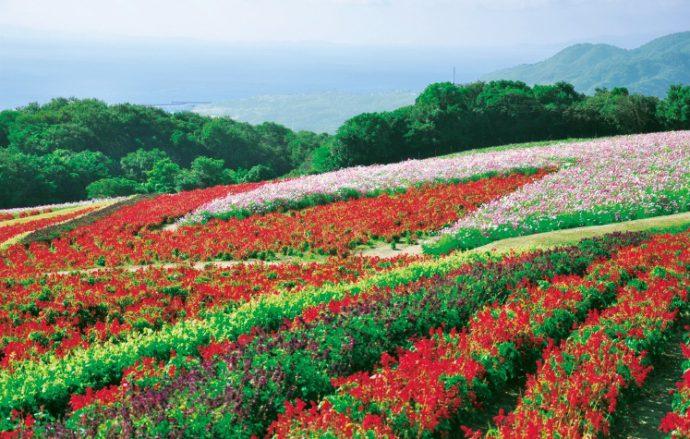 「あわじ花さじき」では、四季の花と雄大な景色を楽しめる
