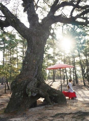 根が盛り上がり、縁起がよいとされる「根上がり松」