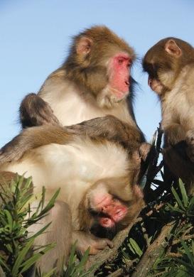 サル同士で仲が良く、性格もおとなしい