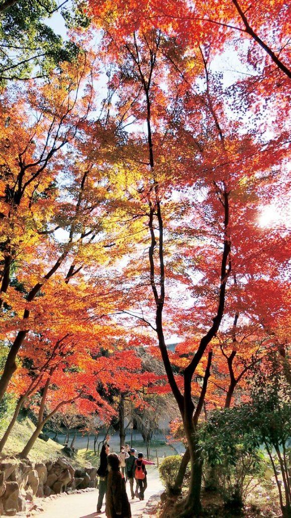 旧邸宅跡地の庭園を散策しながら紅葉を楽しむ