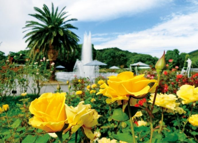 約180種4,000株の色とりどりのバラが咲き誇る