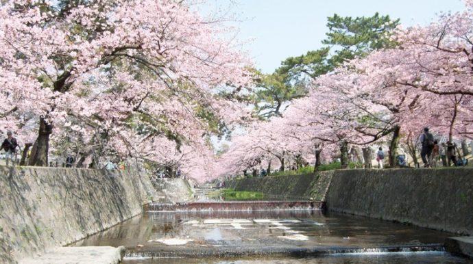 昭和24年(1949)に桜の若木が植えられ、今では桜の名所として愛されている。 西宮市情報公開課所蔵
