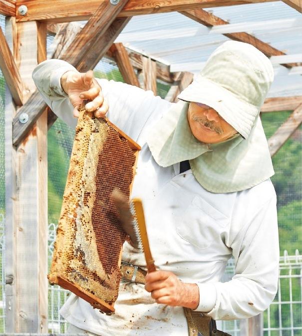 巣板を持ち上げハチを刷毛で払い落とす、俵養蜂場の春井さん