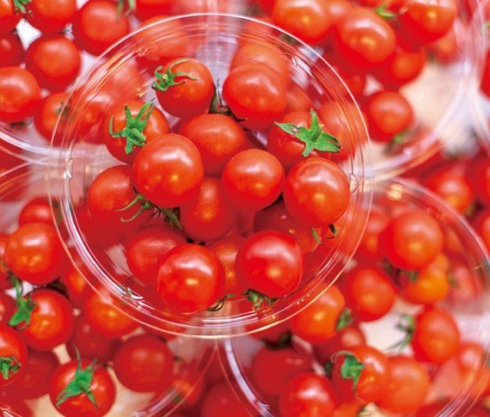 冬から春にかけての人気商品「塩ミニトマト」は、海からのミネラルが 多く含まれる土地で作られているので糖度が高く甘いのが特徴