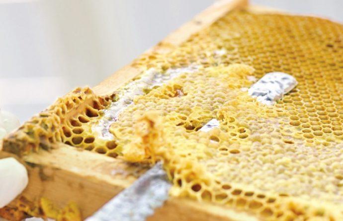 巣板についている蜜蓋をナイフで切り落とし、遠心分離器にかける